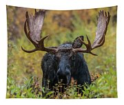 Custer In Autumn Tapestry