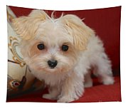Cute Maltipoo Tapestry