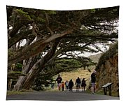 Cypress Tunnel Tapestry