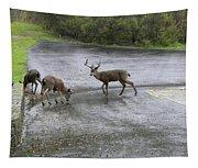 D-a0033 Mule Deer Tapestry