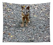 D-a0051-dc Gray Fox Pup Tapestry