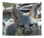 D-a0068 Gray Fox Pup Tapestry