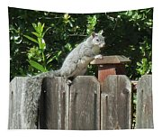 D-a0071-e-dc Gray Squirrel On Our Fence Tapestry