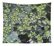 D07343-dc Lichen On Rock Tapestry