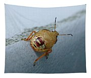 D2b6336-dc Colorful Insect On Sonoma Mountain Tapestry