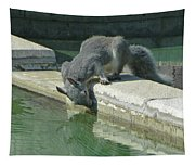 D2b6341-dc Gray Squirrel Drinking From The Pool Tapestry