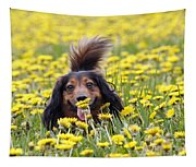 Dachshund On A Meadow In Bloom Tapestry