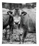 Dairy Cow On A Farm Stowe Vermont Black And White Tapestry