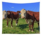 Cattle Andover New Hampshire Tapestry