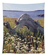 136236-daisies And Driftwood  Tapestry