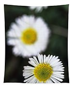 Daisys Tapestry