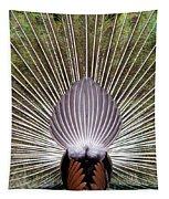 Dancing Peacock, Kanha National Park Tapestry