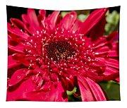 Dark Red Gerbera Daisy Tapestry