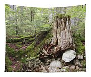 Decaying Tree Stump Tapestry