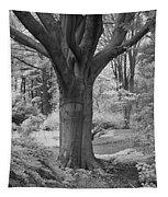 Deciduous Tree Ir Tapestry