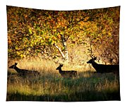 Deer Family In Sycamore Park Tapestry