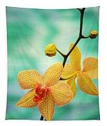 Dendrobium Tapestry