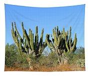 Desert Cacti In Cabo Pulmo Mexico Tapestry