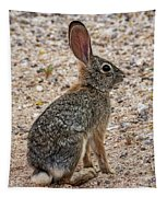 Desert Cottontail 1822 Tapestry