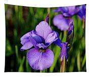 Dew Kissed Iris Tapestry