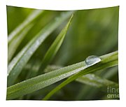 Dewy Drop On The Grass Tapestry