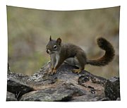 Douglas' Squirrel On The Rocks Tapestry