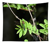 Downy Emerald Tapestry