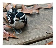 Downy Wooodpecker Picoides Pubscens Tapestry