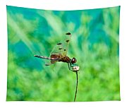 Dragonfly Hanging On Tapestry