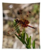 Dragonfly Resting On The Green Tapestry
