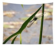 Dragonfly Resting Upside Down Tapestry