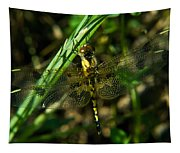 Dragonfly Venation Revealed Tapestry