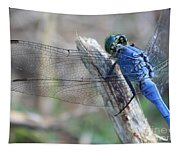 Dragonfly Wing Detail Tapestry
