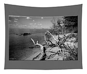 Driftwood Tapestry