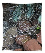 Droplets Over Web Tapestry