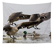 Duck Ducks Tapestry
