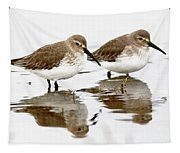 Dunlin Seeing Double Tapestry