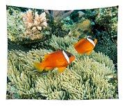 Dusky Clownfish Tapestry