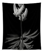 Dutchman's Breeches Black And White Tapestry