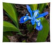 Dwarf Iris Tapestry