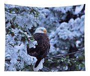 Eagle In A Frosted Tree Tapestry