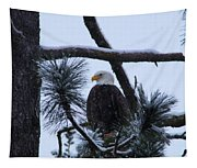 Eagle On A Frosted Limb Tapestry