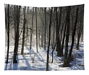 Early Morning Fog In A New Hampshire Forest Tapestry