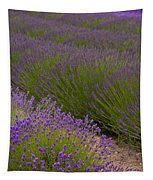Early Morning Lavender Tapestry