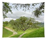 East Ridge Trail -  Spring Tapestry
