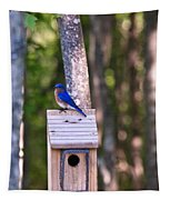 Eastern Bluebird Perched On Birdhouse 2 Tapestry