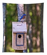 Eastern Bluebird Perched On Birdhouse 3 Tapestry