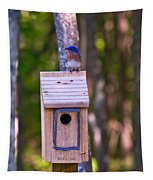 Eastern Bluebird Perched On Birdhouse 4 Tapestry