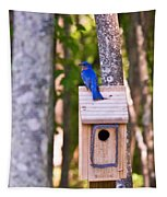 Eastern Bluebird Perched On Birdhouse Tapestry