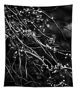 Eastern Redbud In Black And White Tapestry